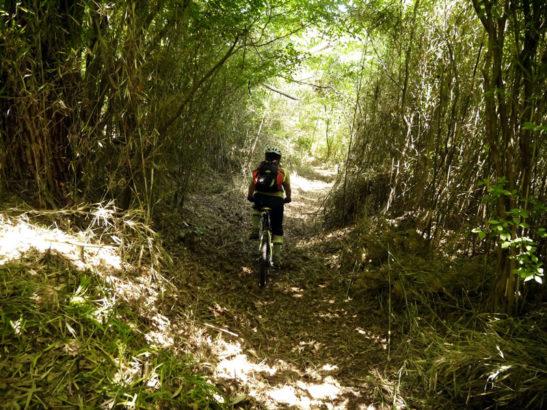 山林の斜面を走るマウンテンバイク 東吾妻MTB 榛名山 マウンテンバイク