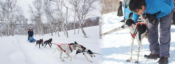 水上高原スキーリゾート 犬ぞり