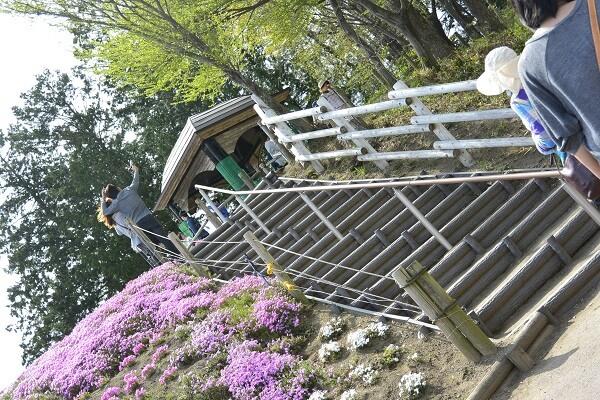 みさと芝桜公園 階段