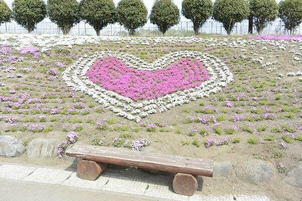 みさと芝桜公園 ハート