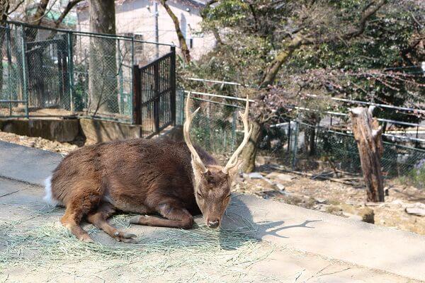 桐生が岡動物園 無料 駐車場