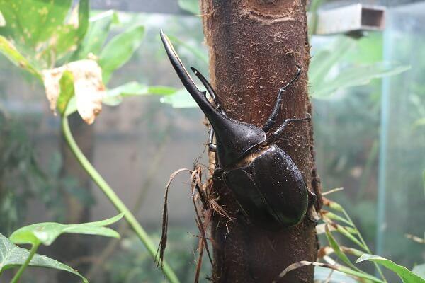 群馬県立ぐんま昆虫の森 桐生市