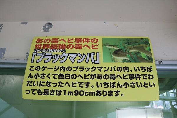 ジャパンスネークセンター ヘビ 太田市やぶ塚