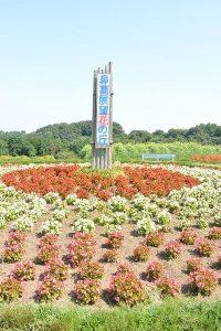 立て看板のオブジェ 鼻高展望花の丘 高崎市 コスモス祭り