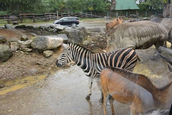 アフリカゾーンの動物たち 群馬サファリパーク