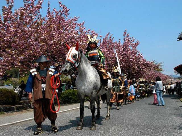 渋川市白井宿八重ざくら祭り