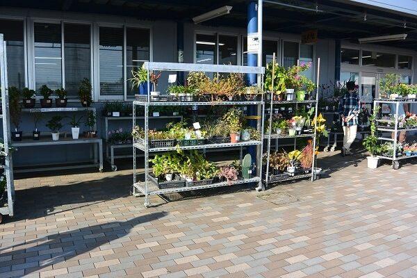 道の駅おおた 植物