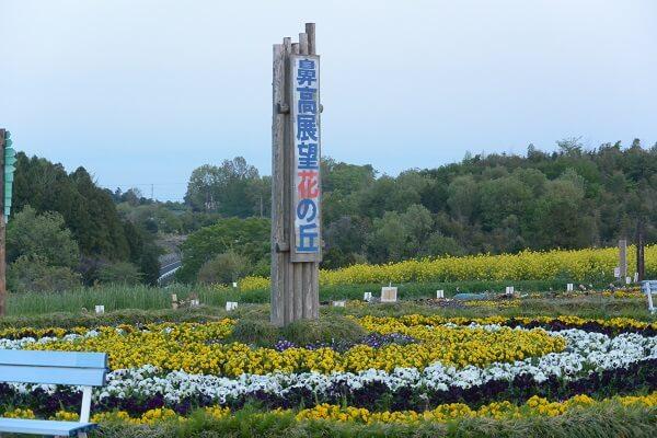 高崎市 鼻高展望花の丘 菜の花祭り