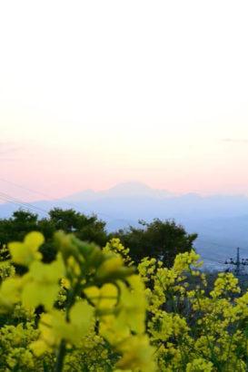 鼻高展望花の丘 景色