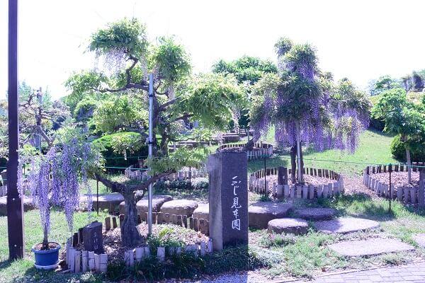 ふじの咲く丘 ふじ見本園