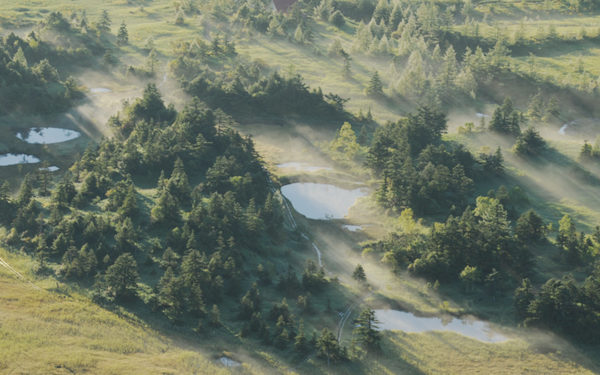 長野原町 日帰りハイキング 芳ヶ平湿原 チャツボミゴケ公園散策ツアー