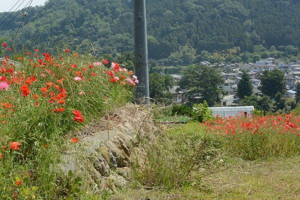 八塩温泉郷 ポピー