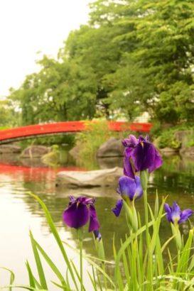 浜川運動公園 花