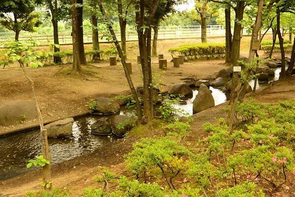浜川運動公園 小川