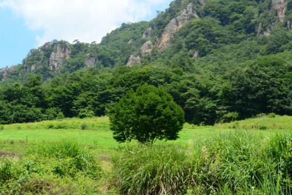 大岩と広大な土地 ヒマワリ畑 大岩フラワーガーデン