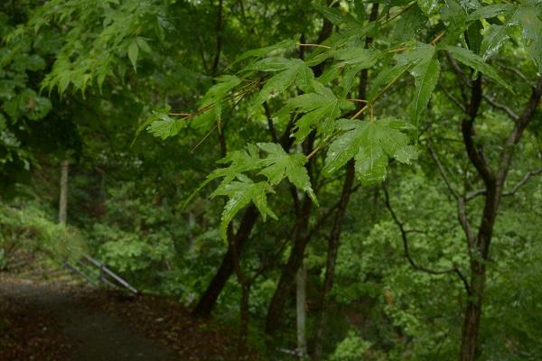 蝉の渓谷 遊歩道