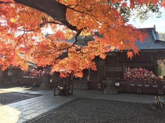少林山達磨寺の紅葉 紅葉スポット おすすめ 群馬