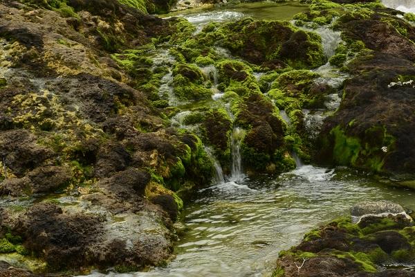 手つかずの自然が残っている チャツボミゴケ公園 紅葉 苔
