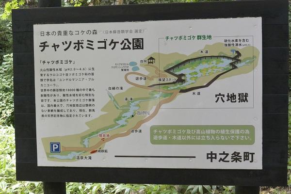 公園案内図 チャツボミゴケ公園 紅葉 苔