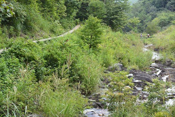 坂道の脇を流れる酸性の川 チャツボミゴケ公園 紅葉 苔