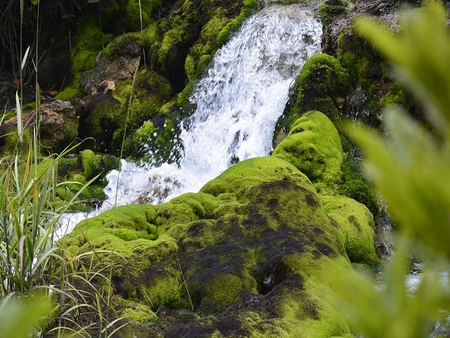 水辺に映える苔 チャツボミゴケ公園 紅葉 苔