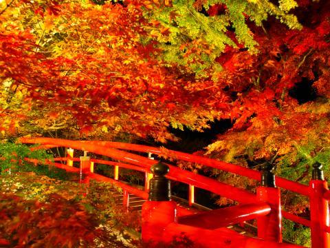 河鹿橋の紅葉ライトアップ 紅葉スポット おすすめ 群馬