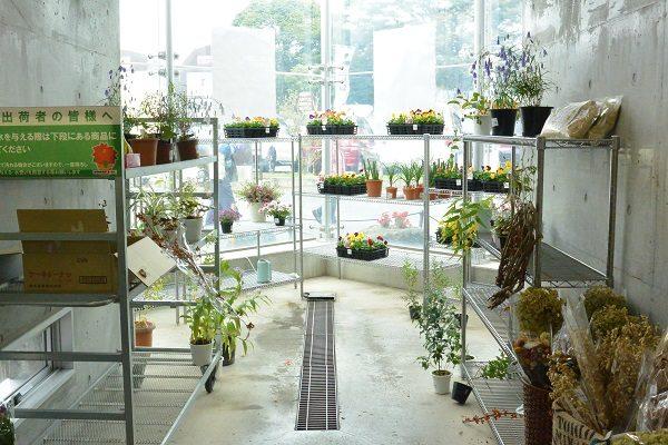 道の駅白沢 植物