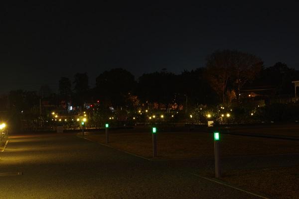 敷島公園イルミネーション バラ園