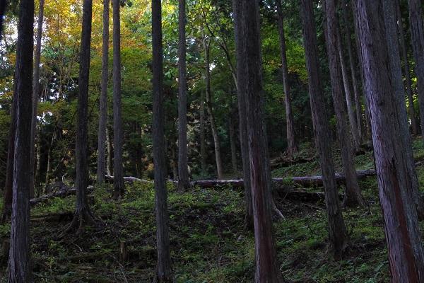 上野村 景色