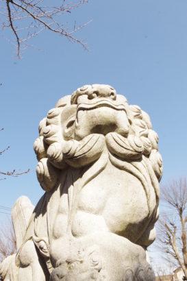 於菊稲荷神社 狛犬様