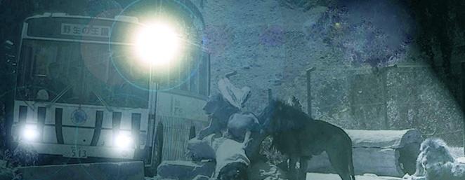 夏休みイベント 群馬サファリパーク ナイトサファリ
