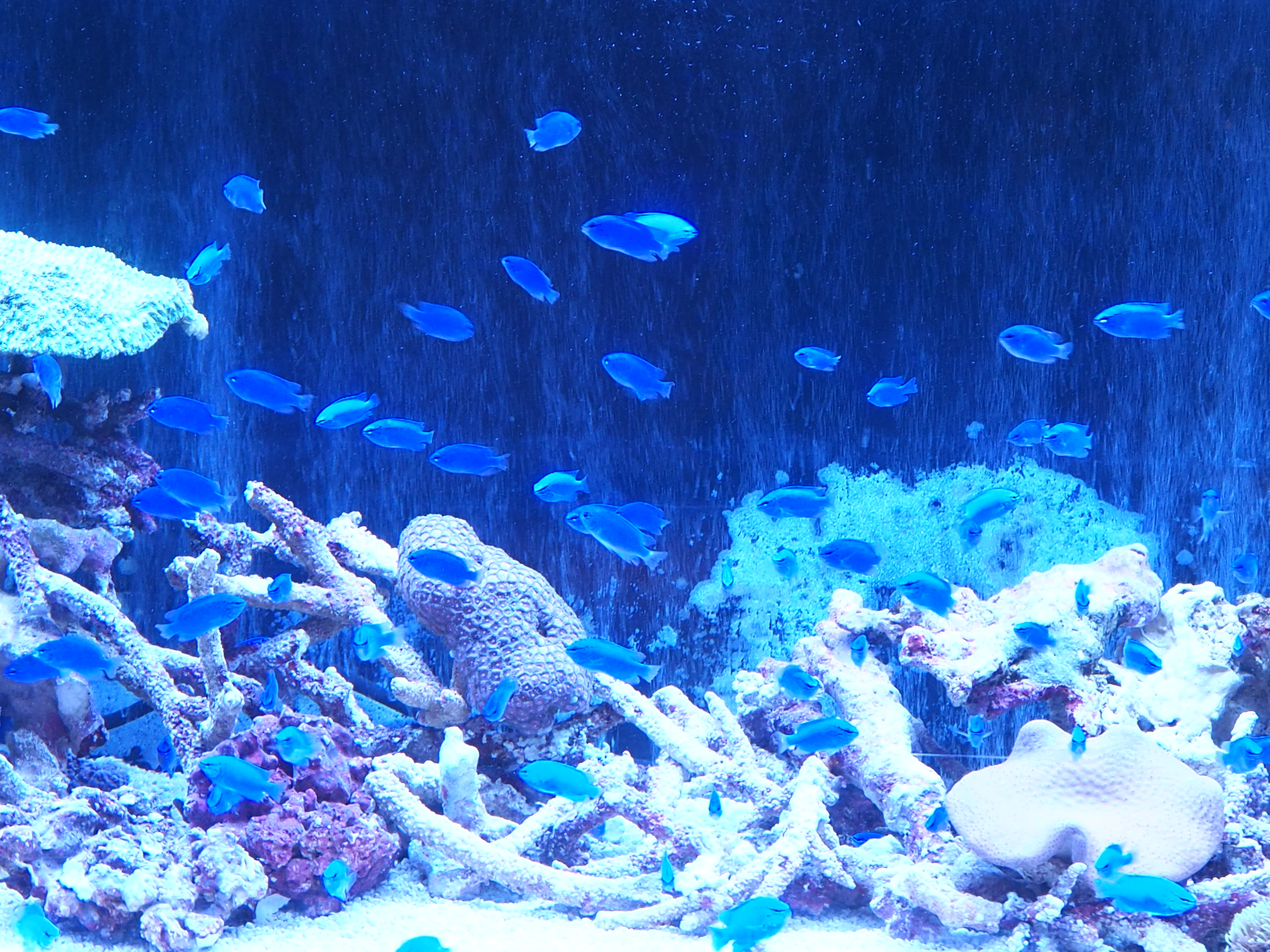 熱帯魚 3