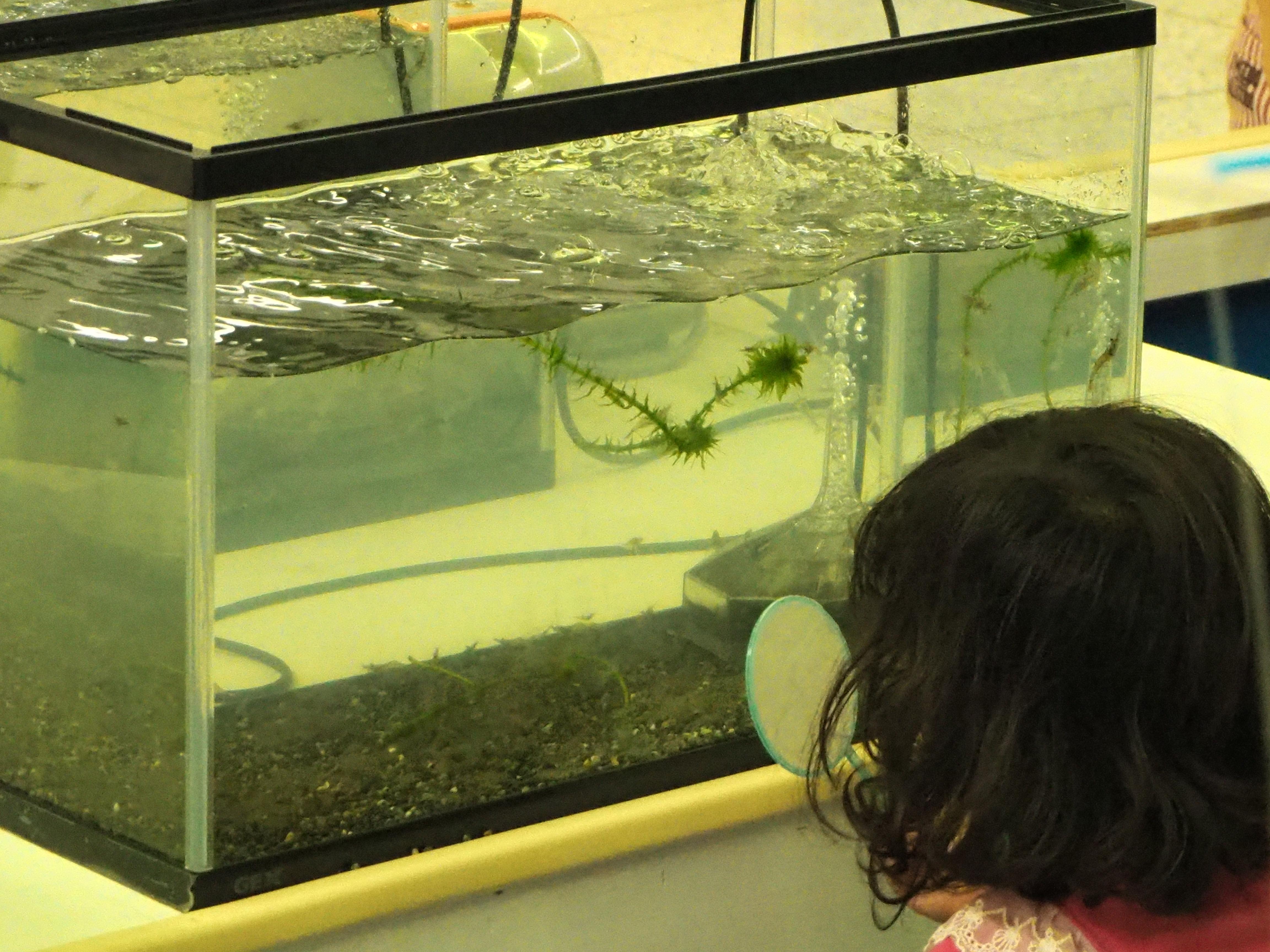 金魚すくい 水槽