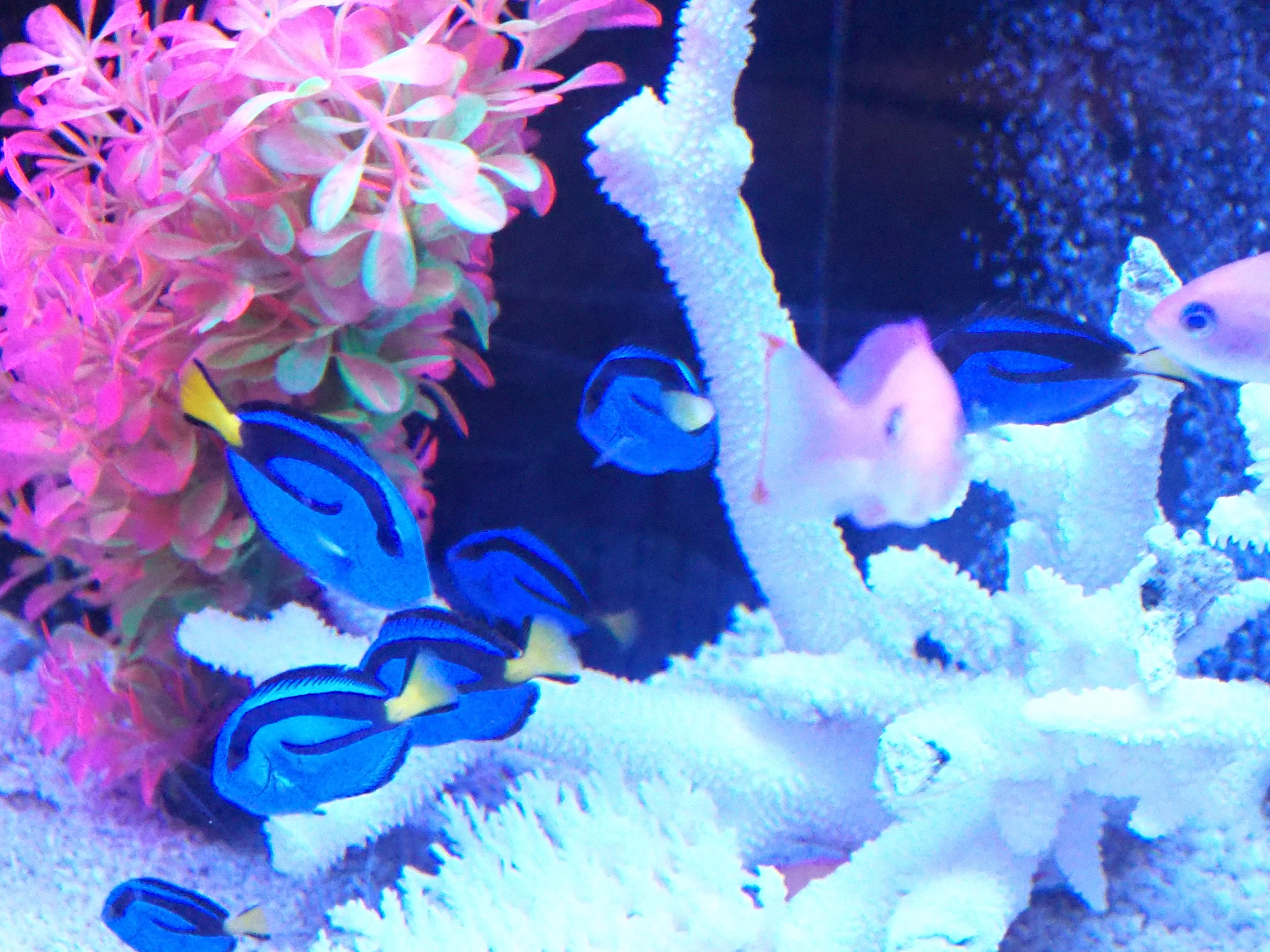 熱帯魚 5
