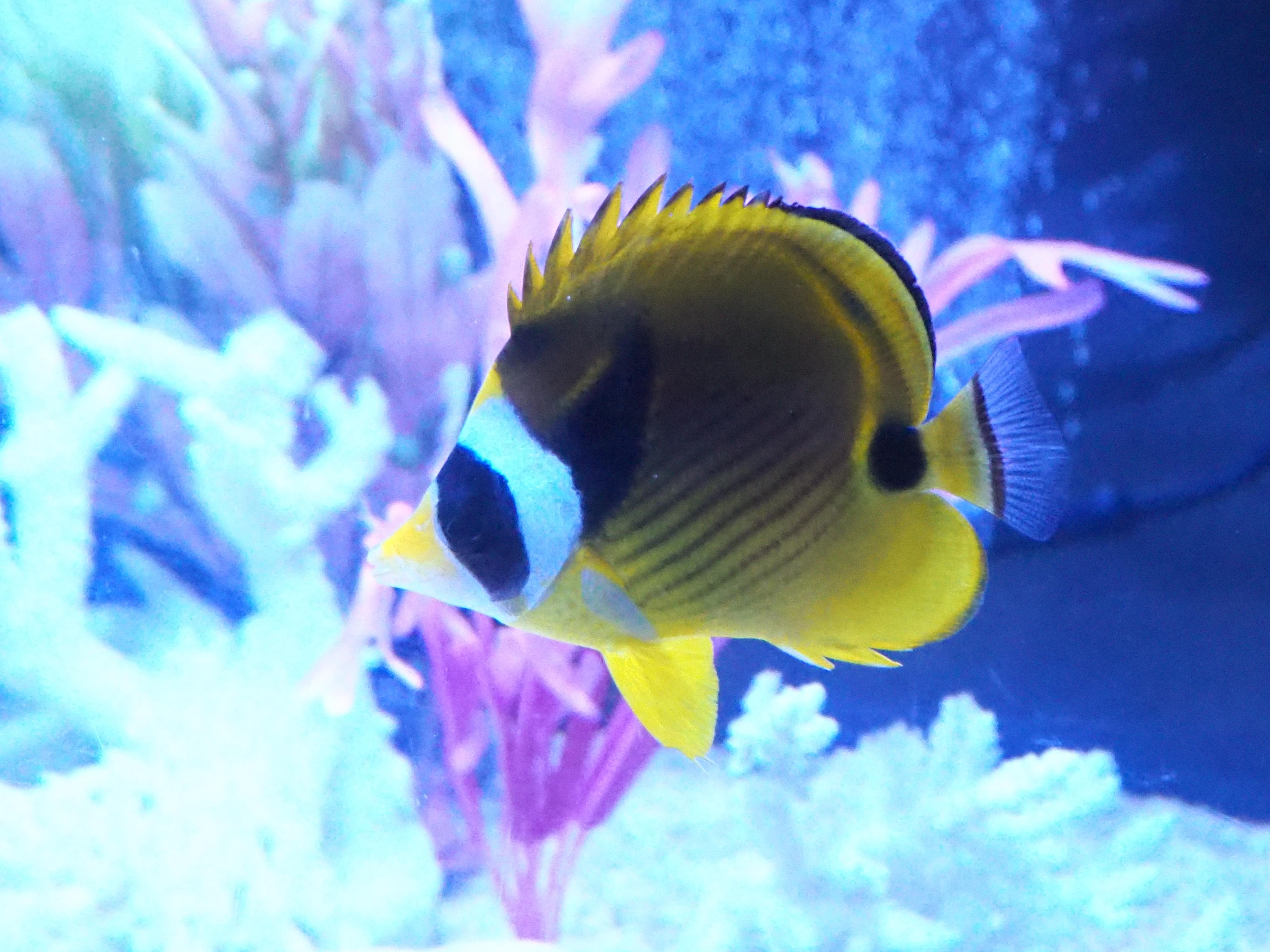 熱帯魚 6