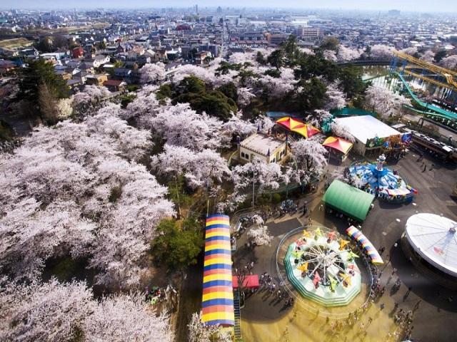 伊勢崎華蔵寺公園 花まつり