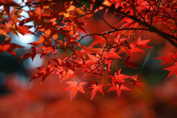 牧水まつり 紅葉