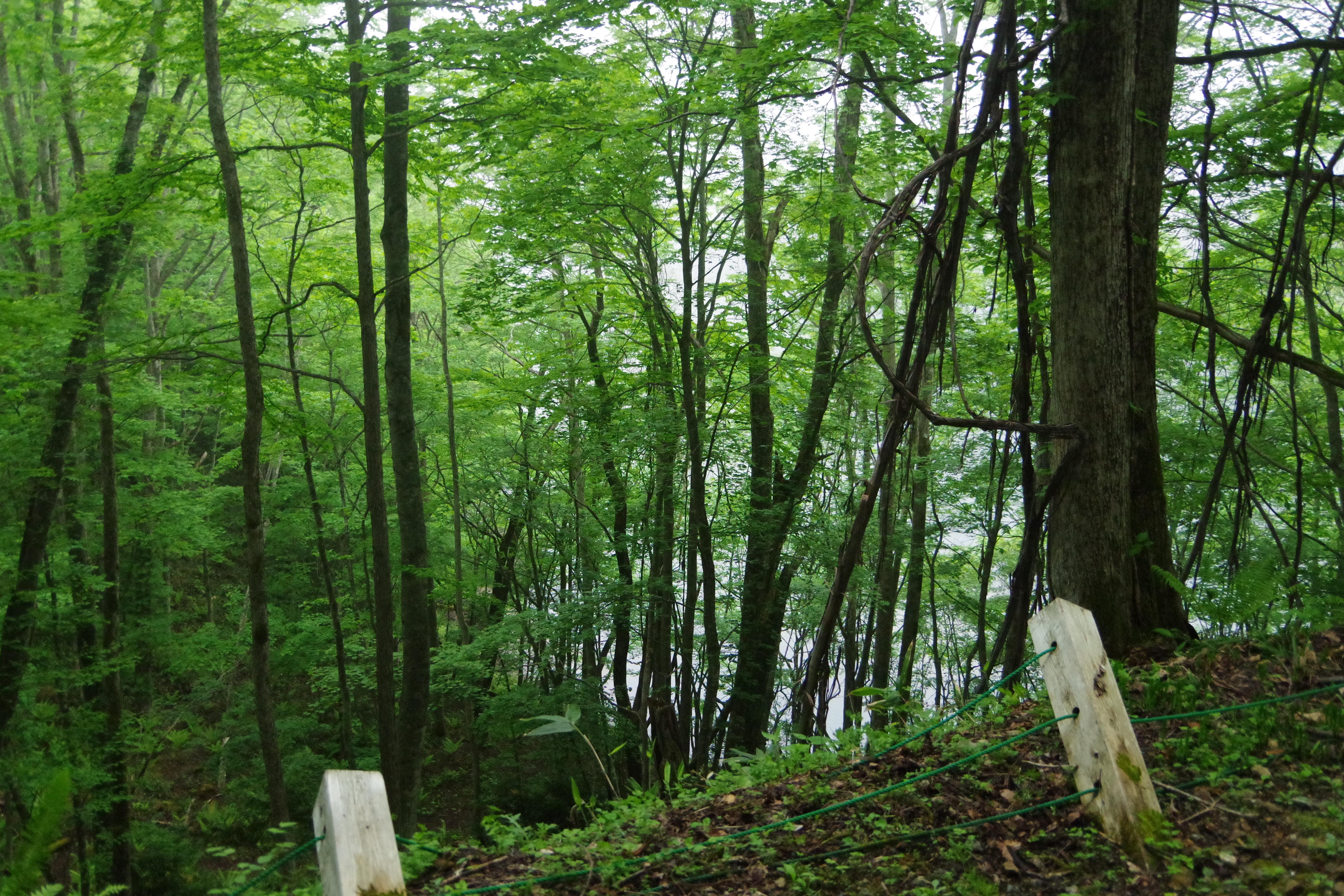 丸沼自然遊歩道 林