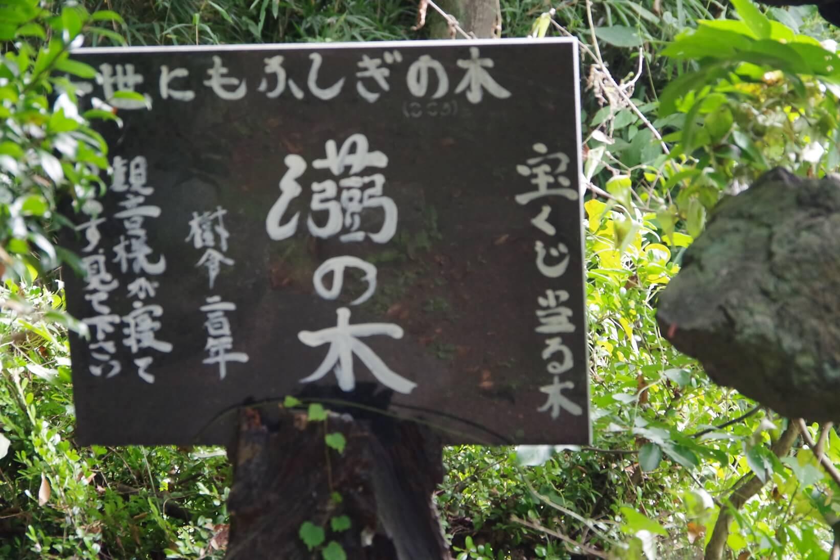 世にもふしぎの木 B級スポット 群馬県高崎市