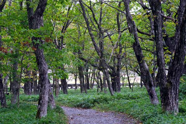 県立赤城公園内遊歩道
