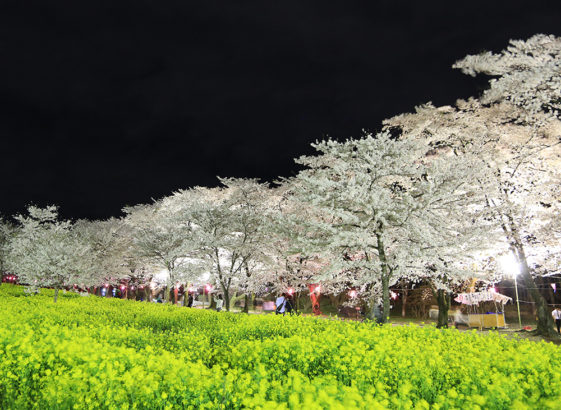夜桜 赤城南面千本桜