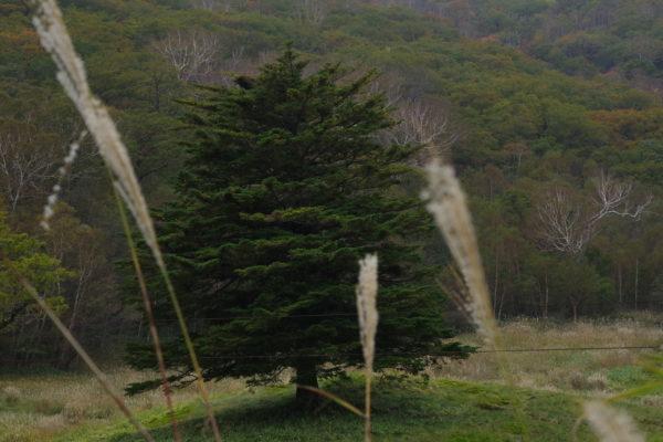 赤城山第1スキー場 すすき