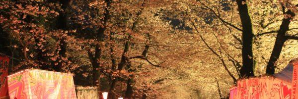 夜桜 赤城南面千本桜 ライブカメラ