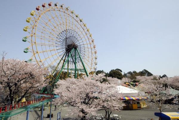 夜桜 華蔵寺公園