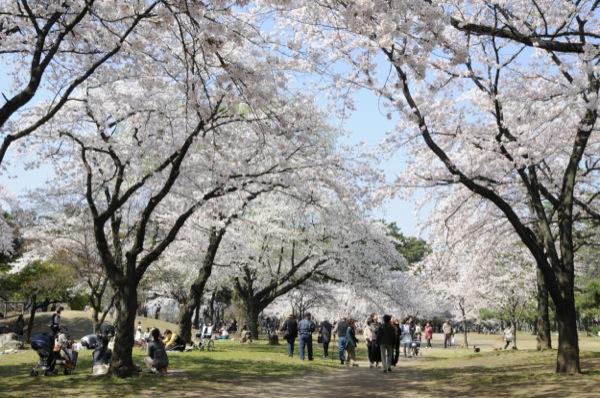 夜桜 群馬県立敷島公園
