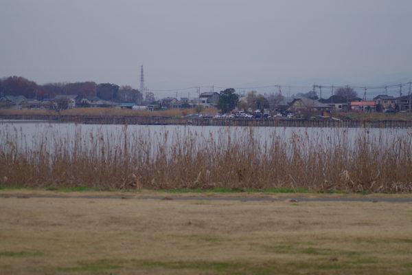 白鳥まつり 多々良沼公園ビュースポット