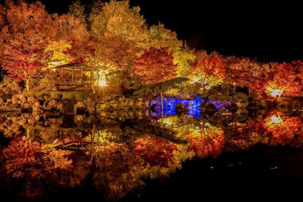夜桜 桜山公園