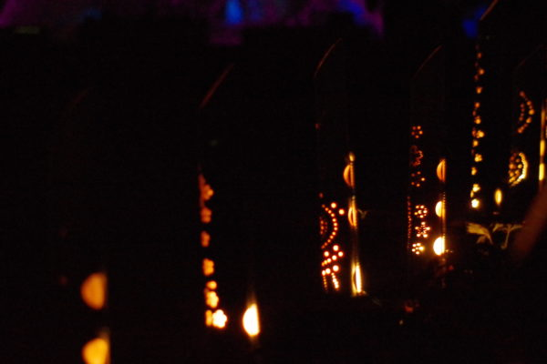 つつじが岡公園 イルミネーション・ライトアップ 木々をモチーフ