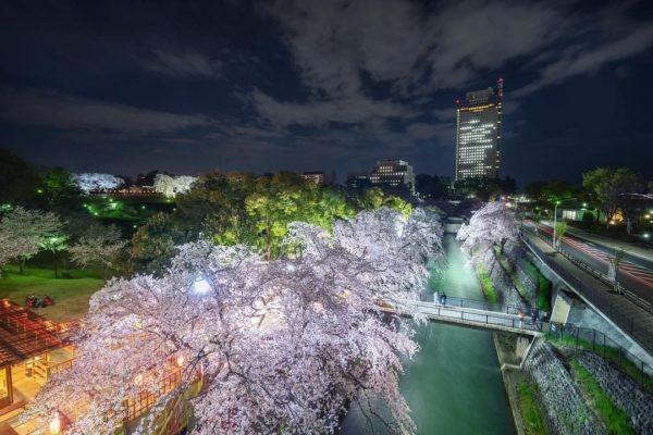 夜桜 前橋公園
