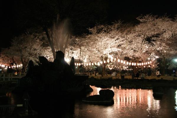 夜桜 高崎城跡公園